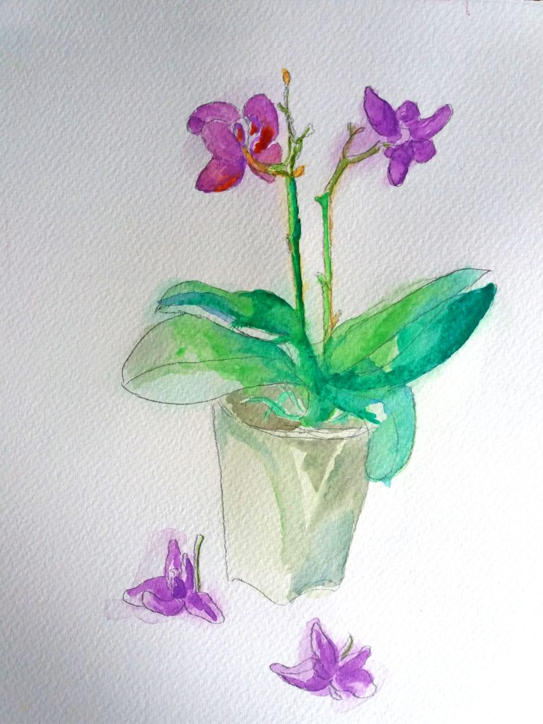 orchid watercolor drawing