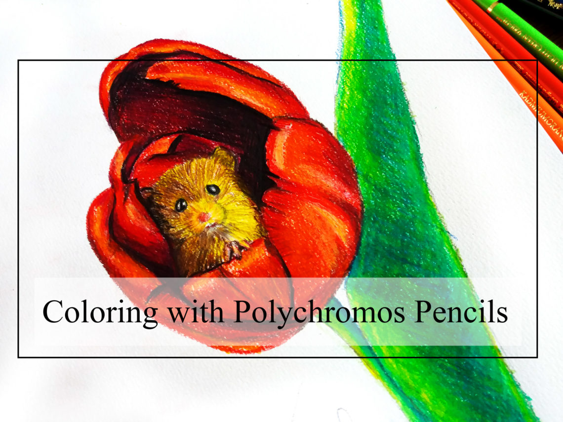 Cute mouse drawing - Ret tulip - Polychromos drawing