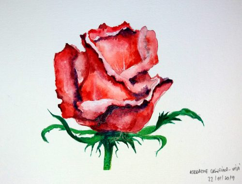 How to draw a rose flower Painting Watercolors - Cristina picteaza - Flori Pictate Trandafir Rosu