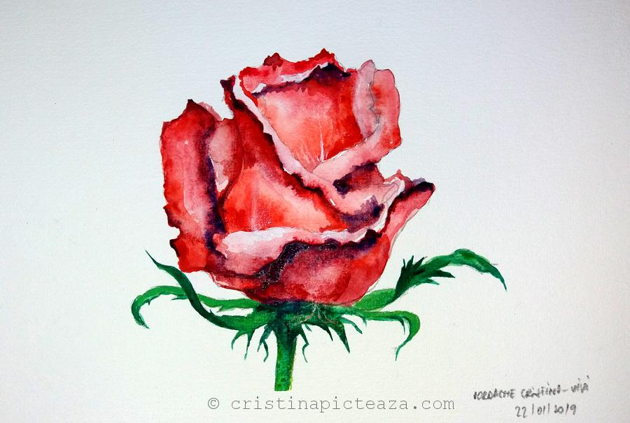 How to draw a rose flower Painting Watercolors - Cristina picteaza