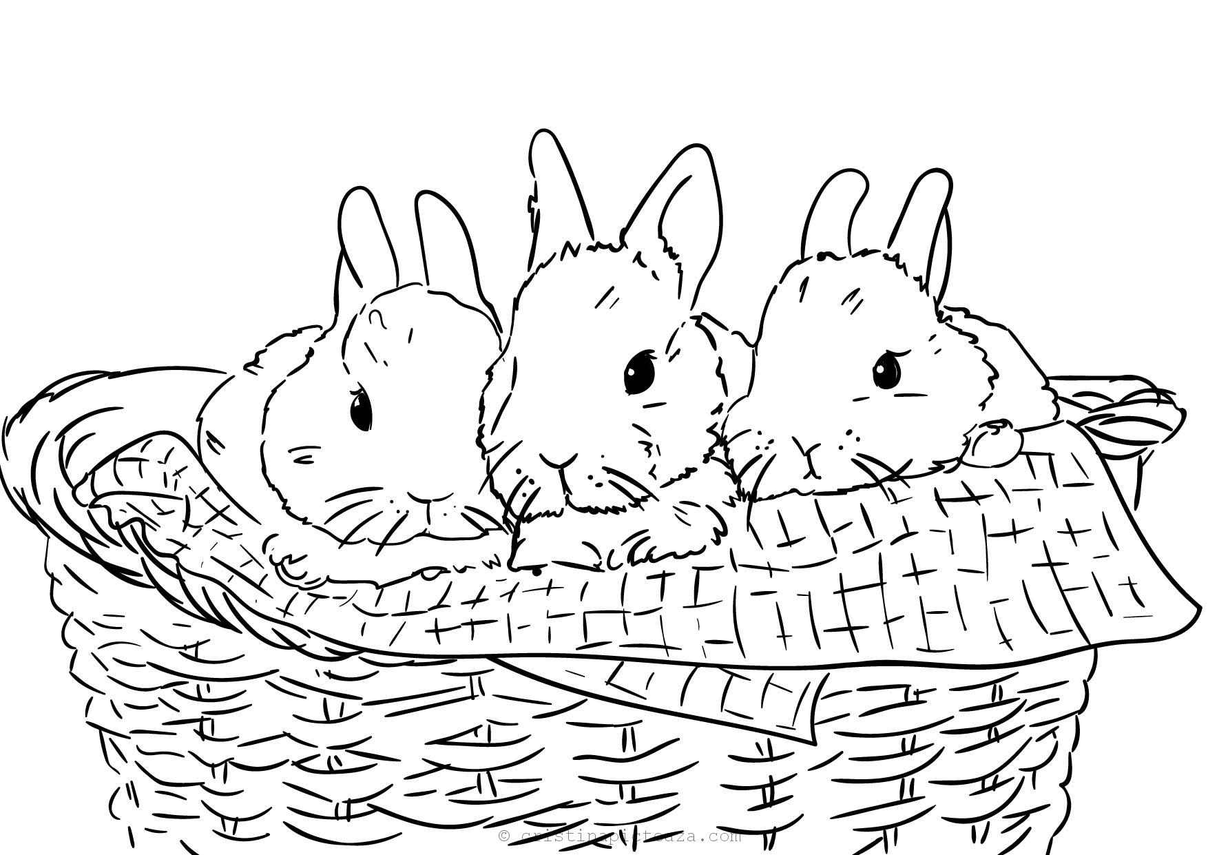 Free Bunny Coloring Pages For Kids Coloring Sheets