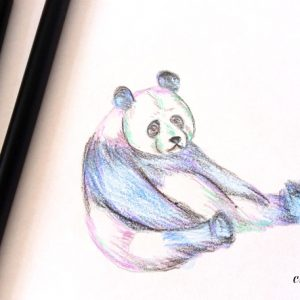 Pencil Drawing - Panda Bear - Desen in Creion Urs panda