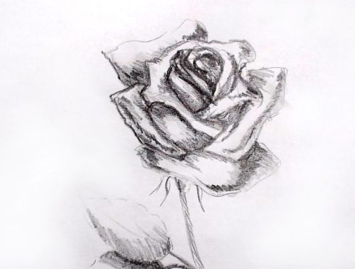 desene in creion - trandafir in creion - pencil drawing rose